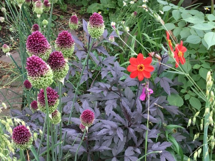 Dahlia and Alliums